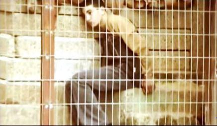 palestinese imprigionato