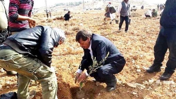 Ziad Abu Ein pianta olivo