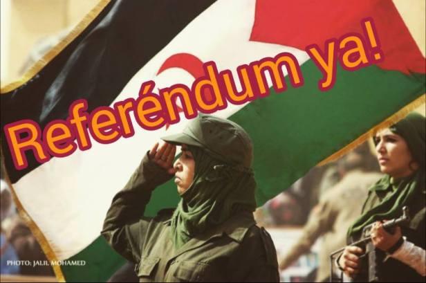 saharawi-referendum